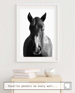La foto muestra un ejemplo de decoración con el motivo HORSE por Amy Hamilton como un mural