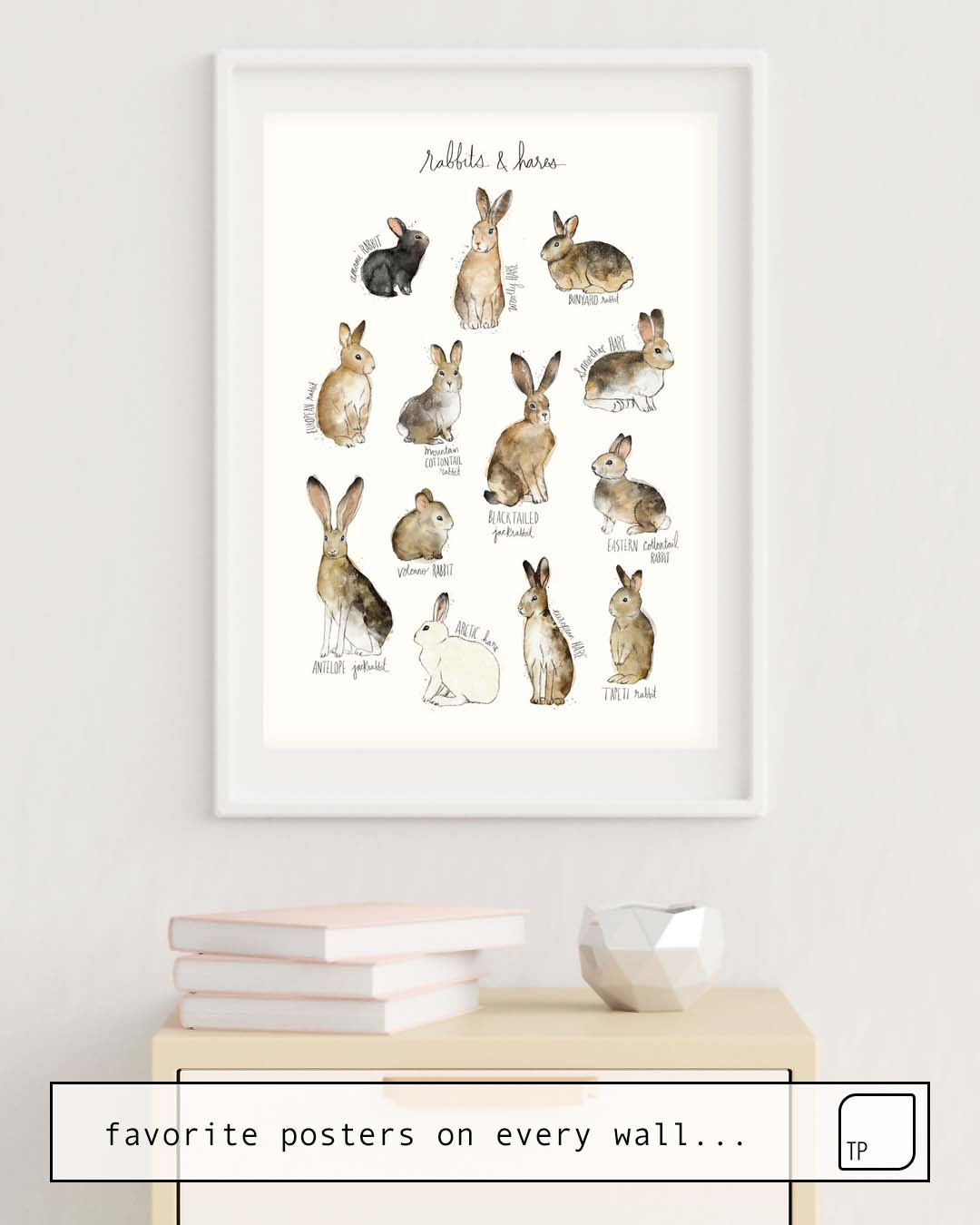 Poster | RABBITS & HARES by Amy Hamilton